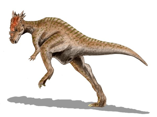 Dracorex by Nobu Tamura