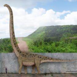 Mamenchisaurus by SameerPrehistorica