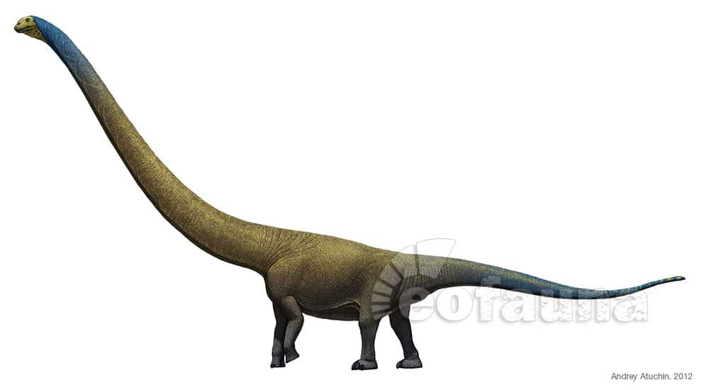 Mamenchisaurus by Andrey Atuchin