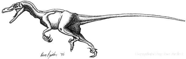 Velociraptor by Dann Pigdon