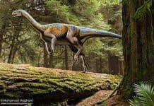 Chilesaurus by Mohamad Haghani