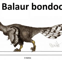 Balaur by Robinson Kunz
