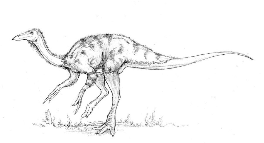Ornithomimus by Asher Elbein