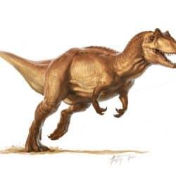 43_allosaurus_l._d._austin