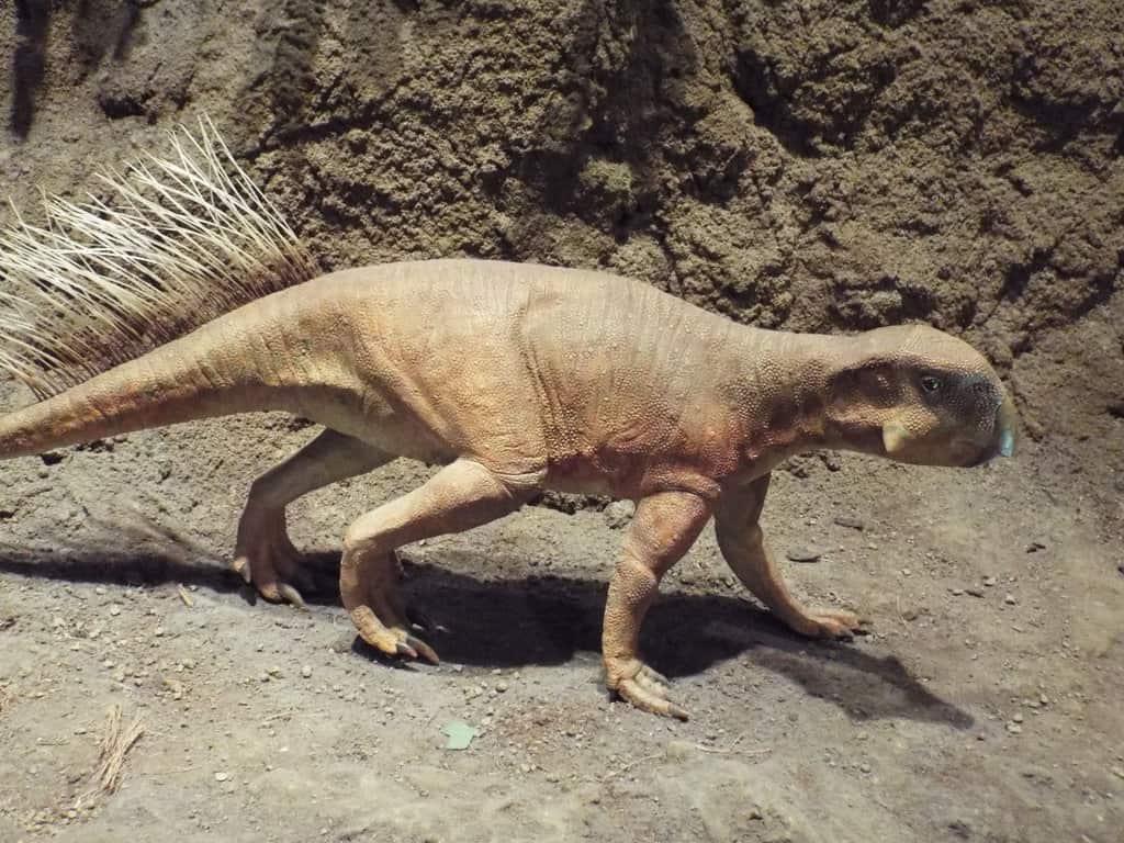Psittacosaurus by Murphy Dragonstar
