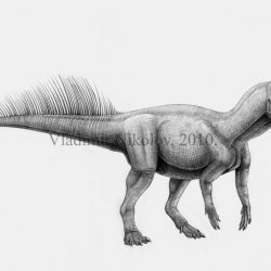 Psittacosaurus by Vladimir Nikolov