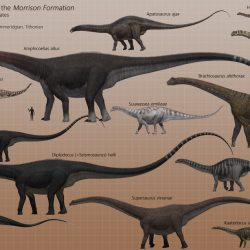 Barosaurus by Jk