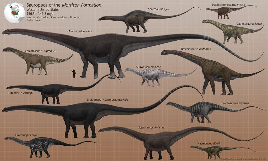 Barosaurus by James Kuether