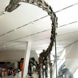 Barosaurus by Kirill Mourzenko