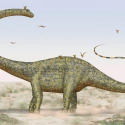 Barosaurus by Peter Montgomery