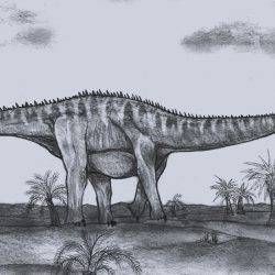 Barosaurus by Dean