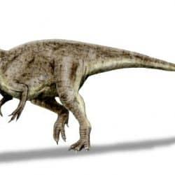 Allosaurus by Nobu Tamura