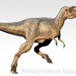 Nanotyrannus by Junglecrow