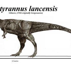 Nanotyrannus by Robinson Kunz