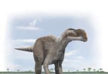 Muttaburrasaurus by Anthony MiloOryx