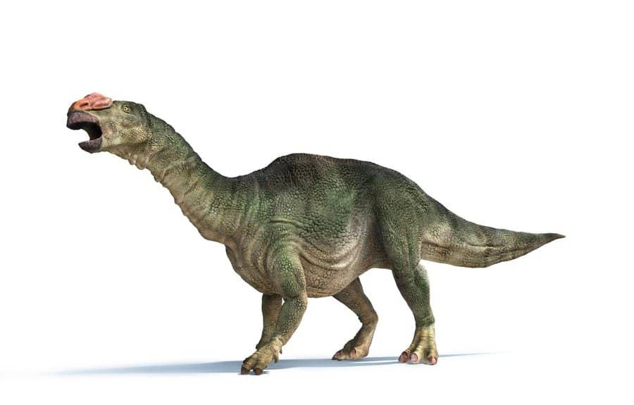 Muttaburrasaurus by Peter Minister
