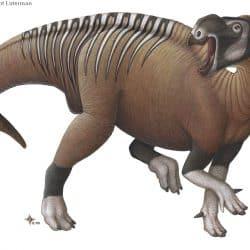 Muttaburrasaurus by H. Kyoht Luterman