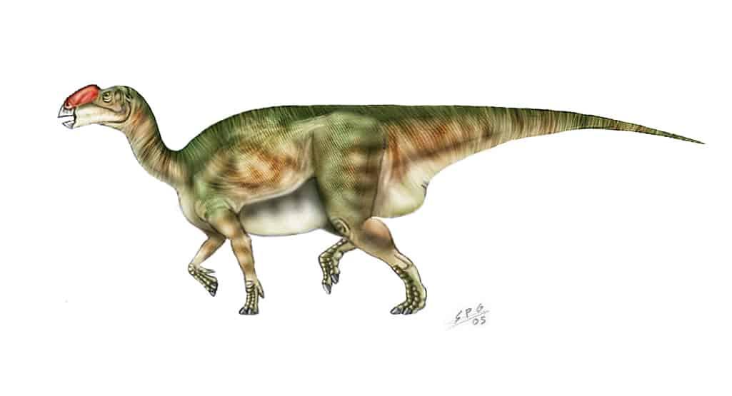 Muttaburrasaurus by Sergio Perez