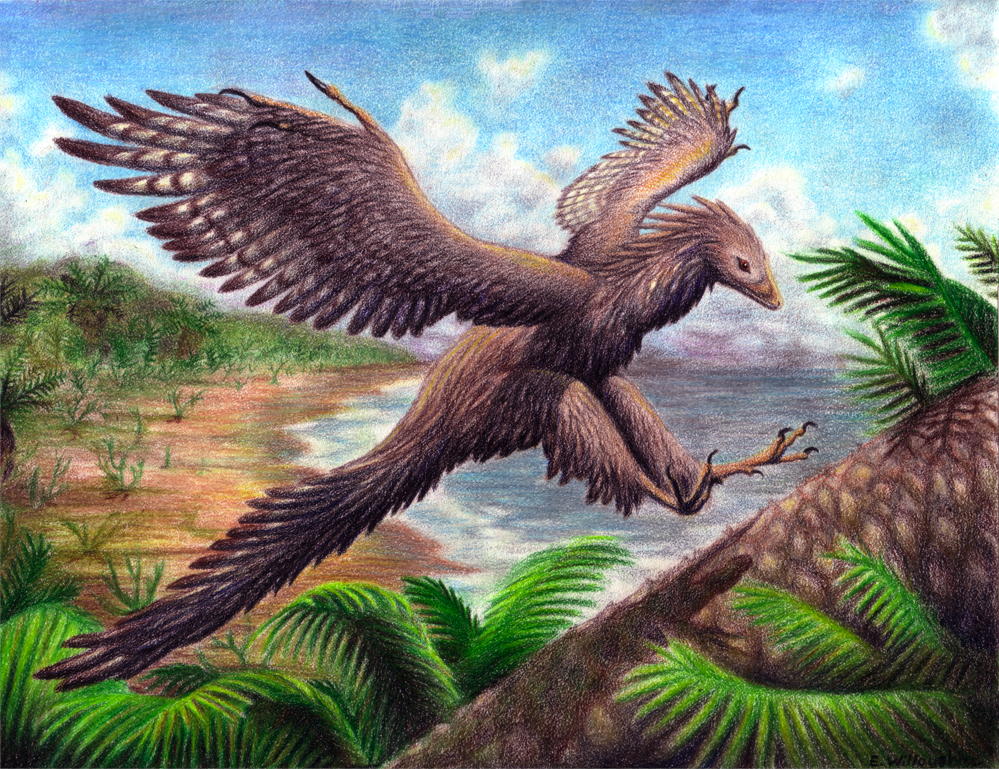 Archaeopteryx by Emily Willoughby