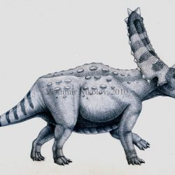 Pentaceratops by Vladimir Nikolov