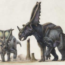 Chasmosaurus by Steve White