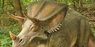 Chasmosaurus by Ricky Beckett