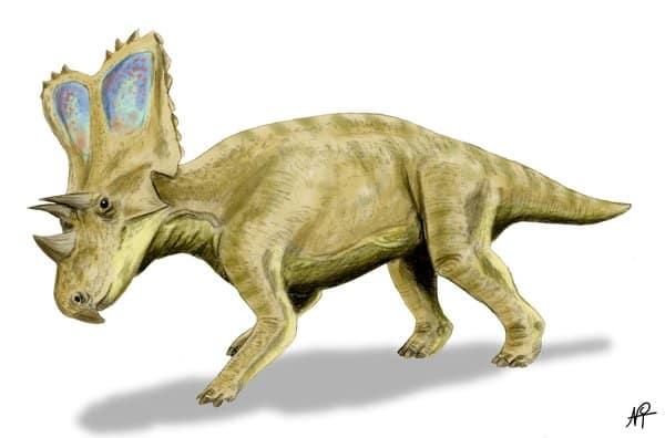 Chasmosaurus by Nobu Tamura