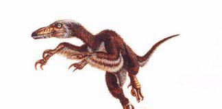 Velociraptor by Mineo Shiraishi