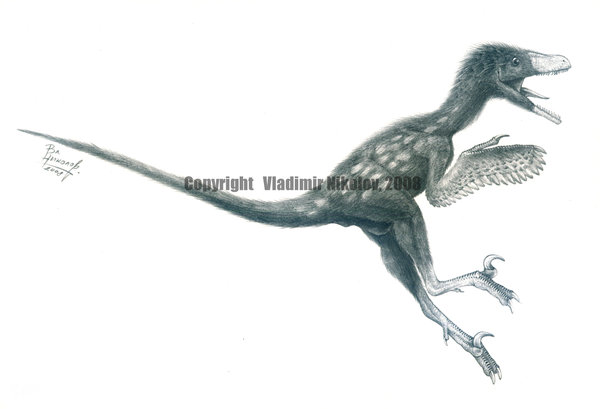 Bambiraptor by Vladimir Nikolov