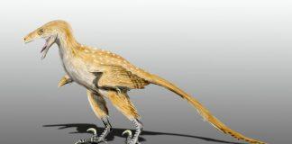 Bambiraptor by Nobu Tamura