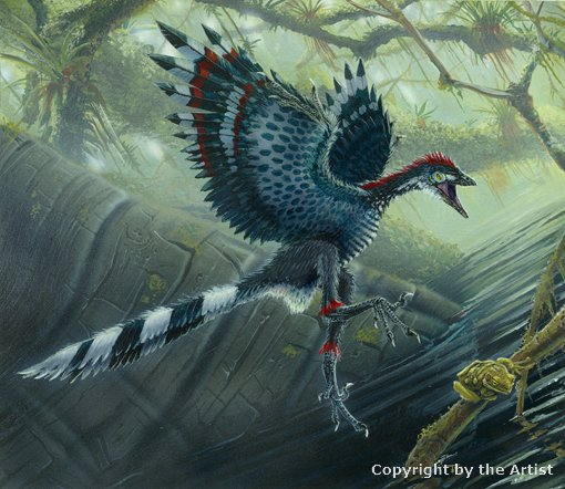 Archaeopteryx by Todd Marshall