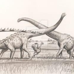 Alamosaurus by Anton