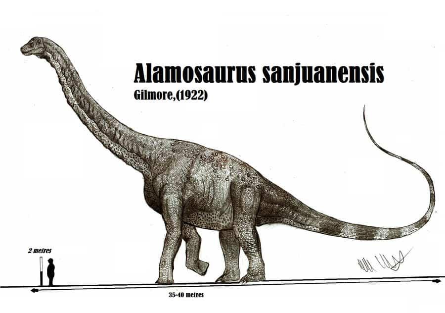 Alamosaurus by Robinson Kunz