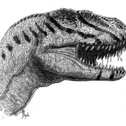 Sinraptor by Alain Beneteau