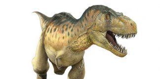 Tyrannosaurus by Paul Heaston