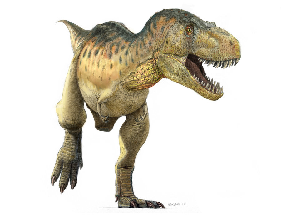 tyrannosaurus facts and pictures