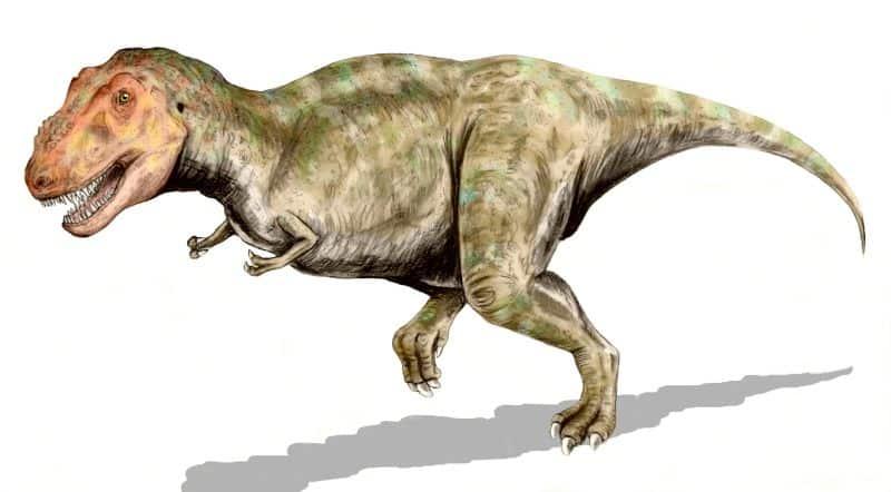 Tyrannosaurus by Nobu Tamura