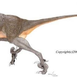 Velociraptor by Michael Skrepnick