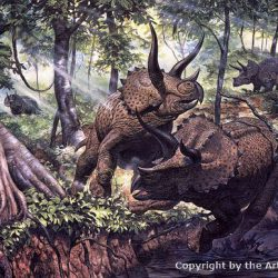 Triceratops by Mark Hallett
