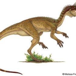 Dilophosaurus by Melissa Frankford