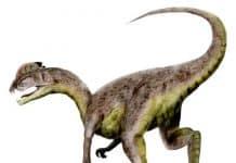 Dilophosaurus by Nobu Tamura