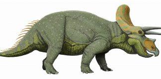 Triceratops by Dmitry Bogdanov