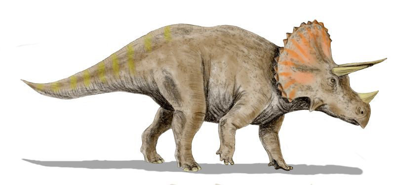 Triceratops by Nobu Tamura