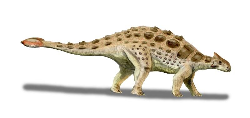Ankylosaurus by Nobu Tamura