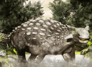 Ankylosaurus by Steven Thompson