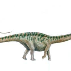 Apatosaurus by Vladimir Nikolov