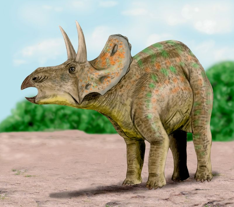 triceratops pictures