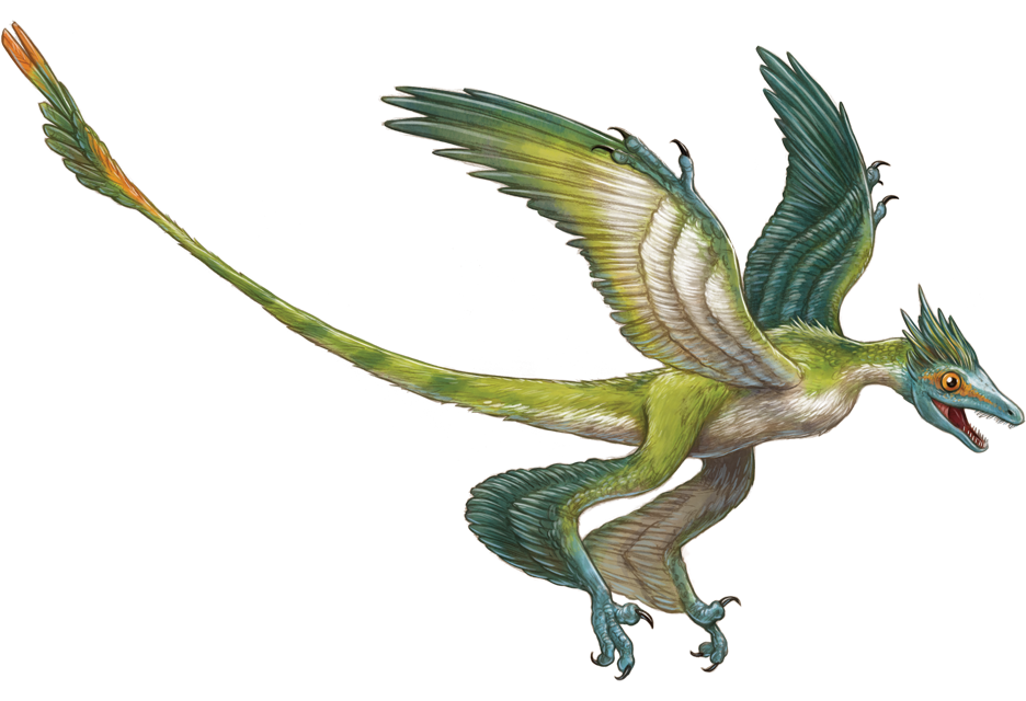 Microraptor by Robert Squier