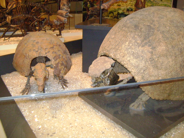 Glyptodon by Jeremy Sand