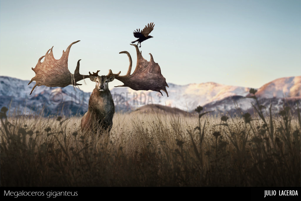 Megaloceros by Julio Lacerda